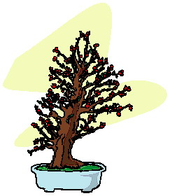 bonsai-image-animee-0003