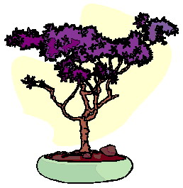 bonsai-image-animee-0005