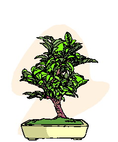 bonsai-image-animee-0006