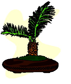 bonsai-image-animee-0007
