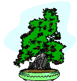 bonsai-image-animee-0009