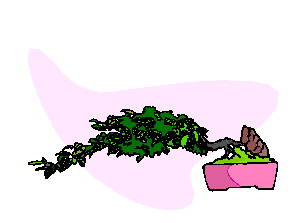 bonsai-image-animee-0010