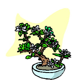 bonsai-image-animee-0011