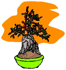 bonsai-image-animee-0012
