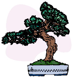 bonsai-image-animee-0013