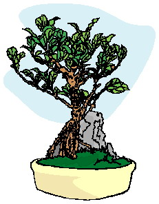 bonsai-image-animee-0014