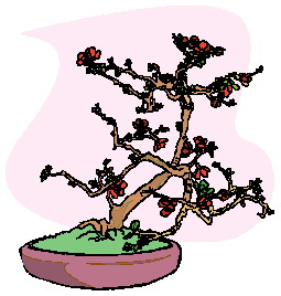 bonsai-image-animee-0016