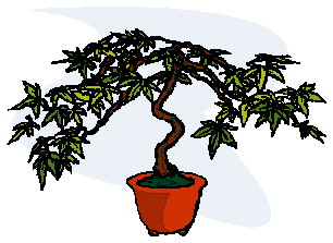 bonsai-image-animee-0017