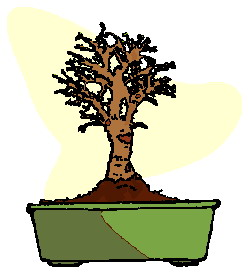 bonsai-image-animee-0018