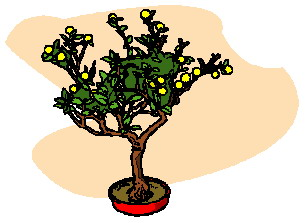 bonsai-image-animee-0020