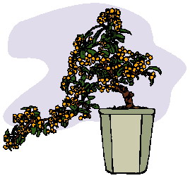 bonsai-image-animee-0021