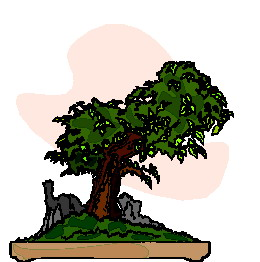 bonsai-image-animee-0022