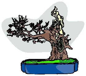 bonsai-image-animee-0023