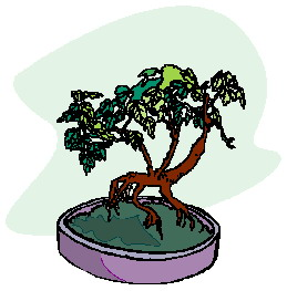bonsai-image-animee-0024