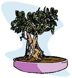 bonsai-image-animee-0025