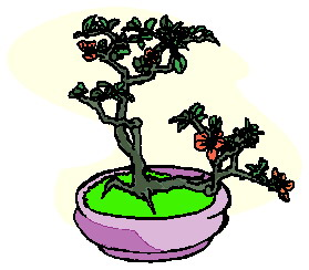bonsai-image-animee-0026