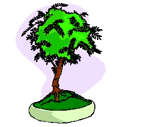 bonsai-image-animee-0027