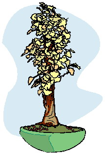 bonsai-image-animee-0028