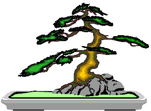 bonsai-image-animee-0029