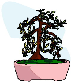 bonsai-image-animee-0031