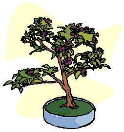 bonsai-image-animee-0032