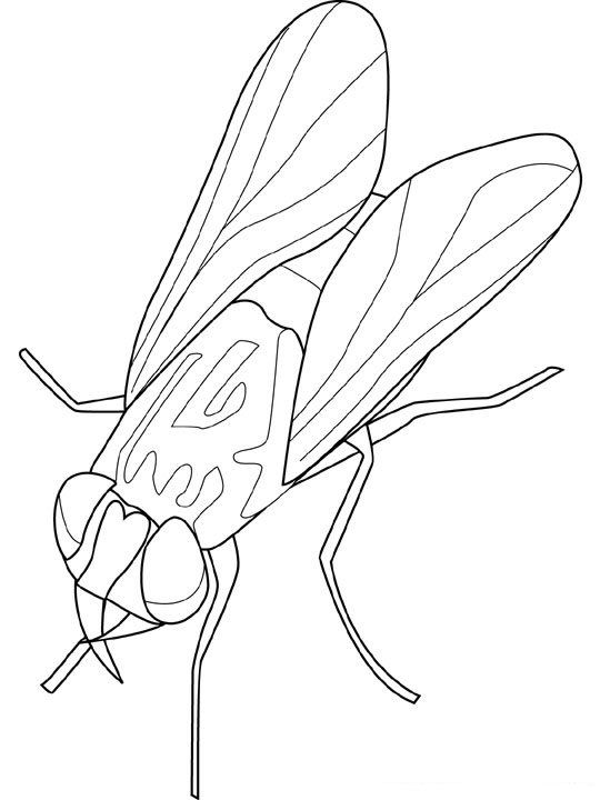 coloriage-insecte-image-animee-0019