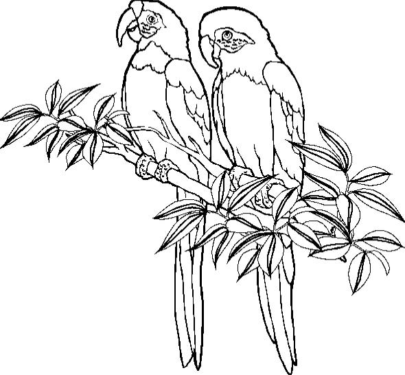 coloriage-perroquet-image-animee-0012