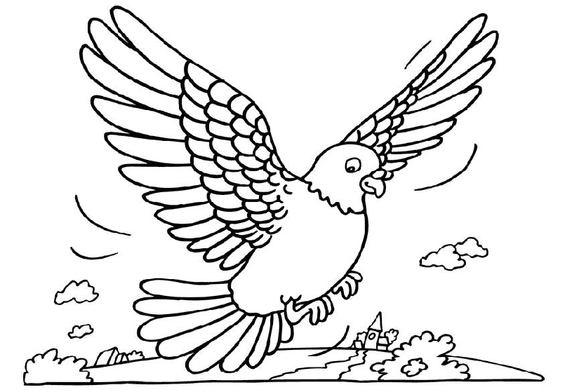 coloriage-pigeon-image-animee-0003